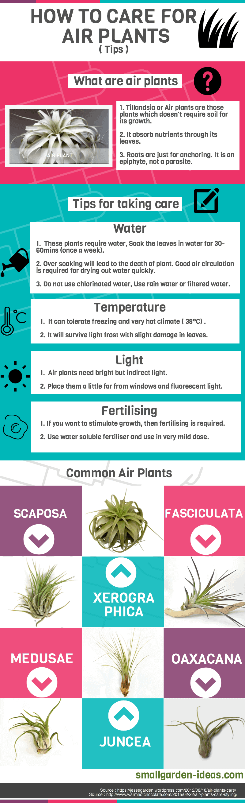How to care for air plants infographics
