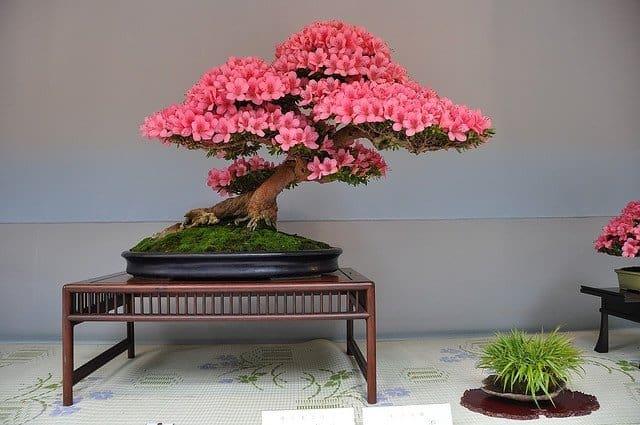 Normal living room ideas - Indoor Bonsai Style Ideas As Home Decor Small Garden Ideas