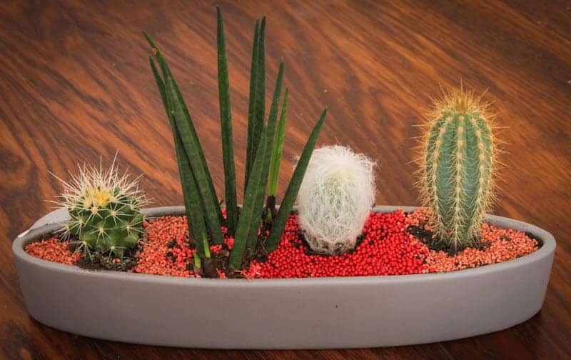 Tiny Cactus Decor Gift Ideas Small