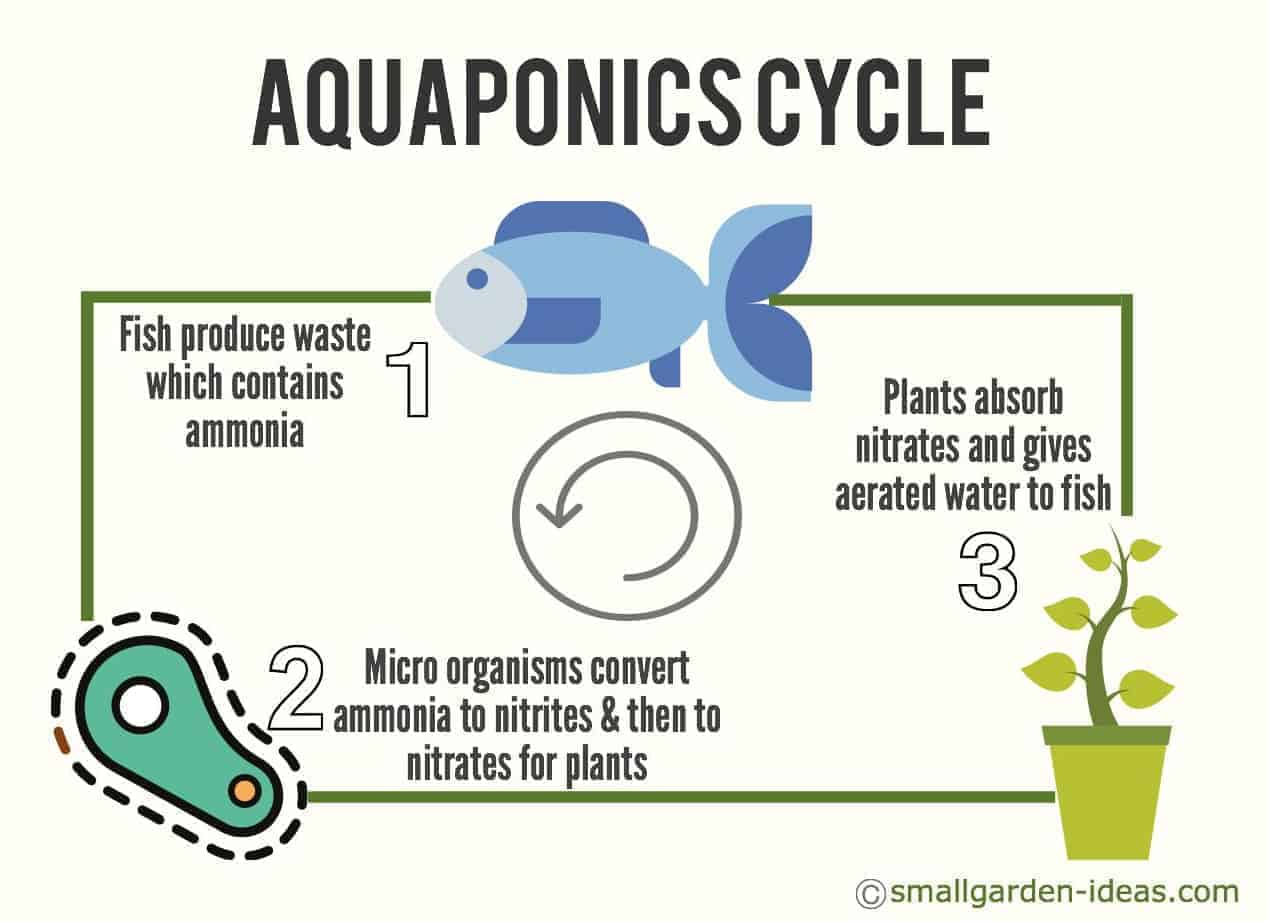 Aquaponics systems for indoor gardening - small garden ideas