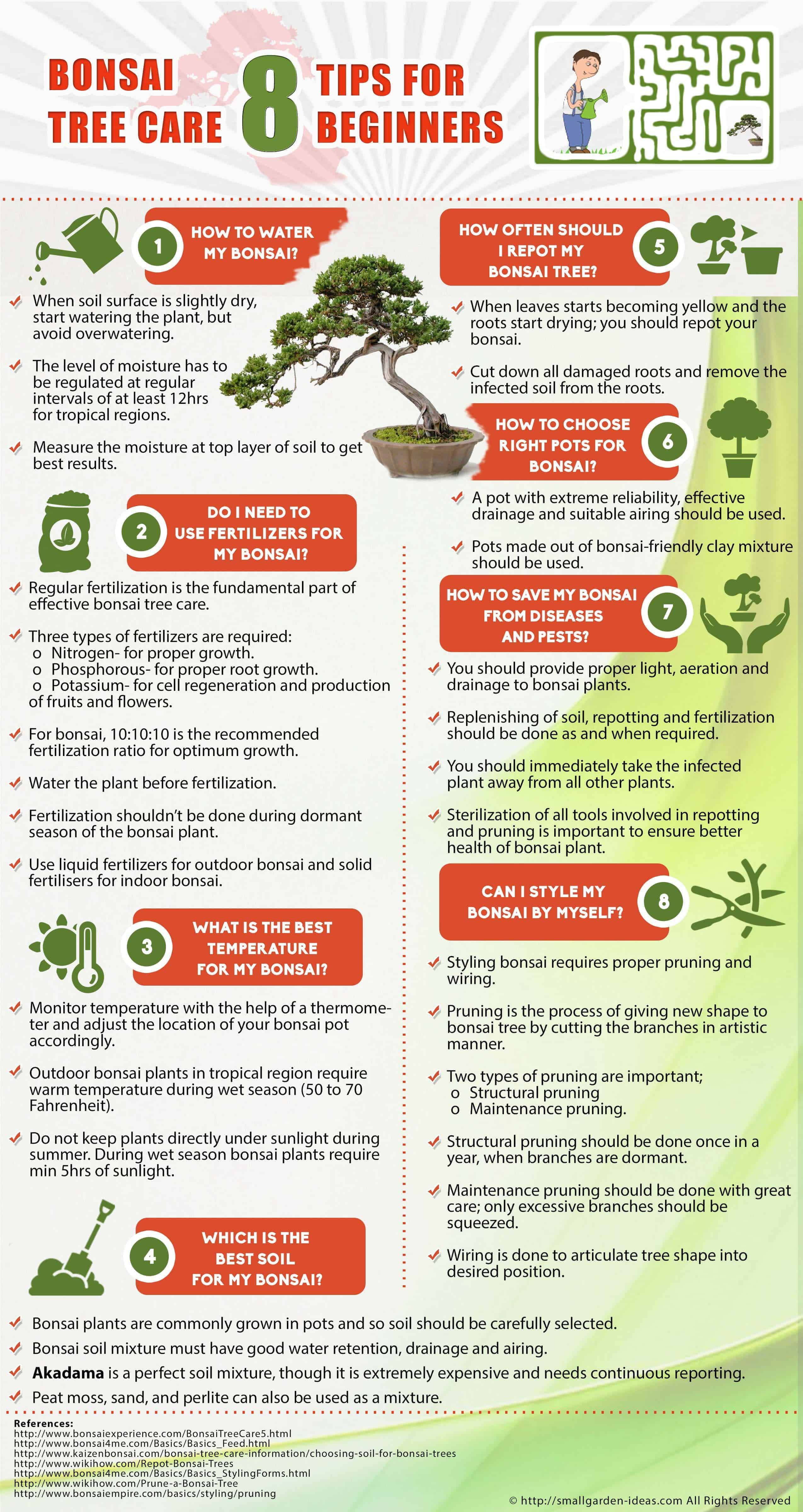 Bonsai Tree Care Infographics