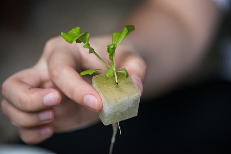 Setting up an aquaponic system is not easy but not rocket science either. One of the many factors to consider is the size of the fish tank. Identifyin