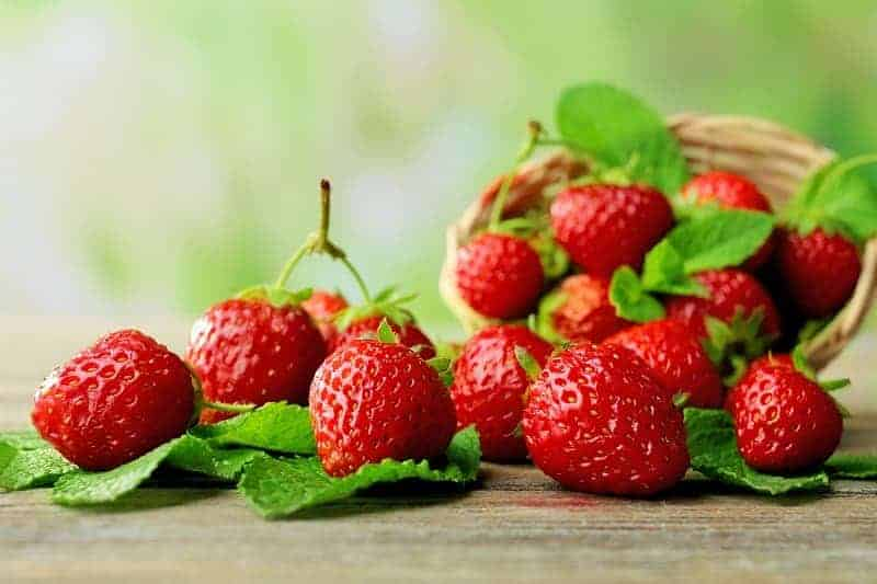 How To Grow Strawberry in Aquaponics