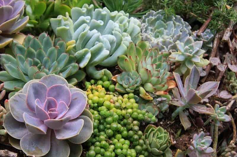 Low Light Succulents