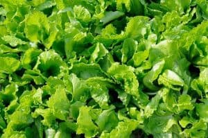 What Kind Of Plant Foods Do I Need For Aquaponics