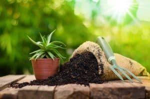 Do Succulents Need Fertilizers