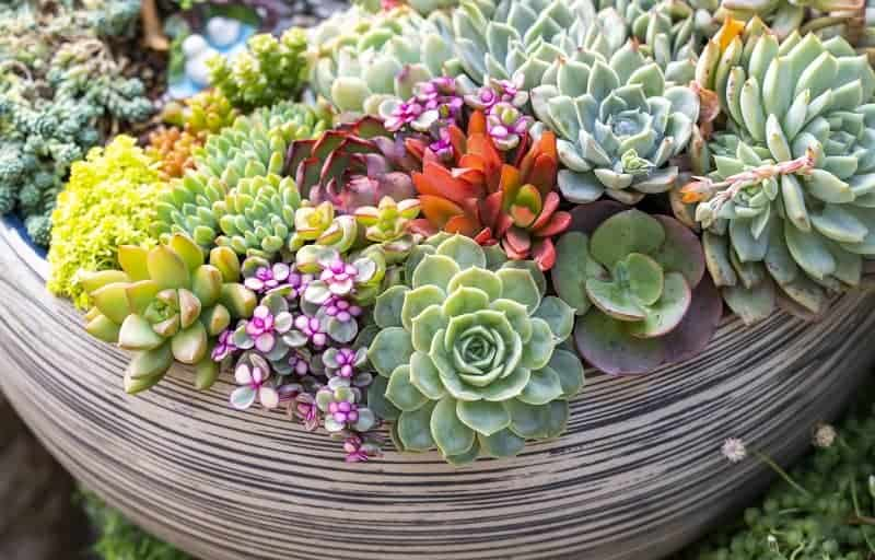 How Many Succulents Per Pot?