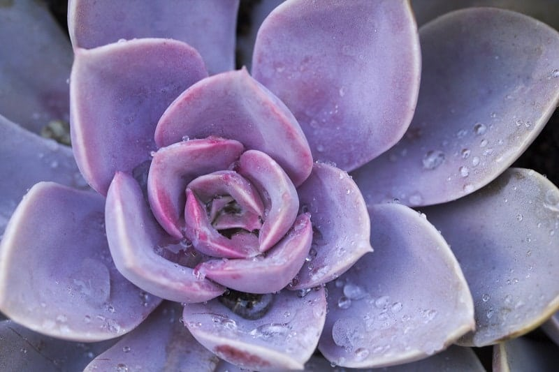 How to Keep Succulents Alive in Winter