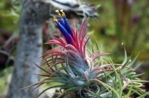 Are Air Plants Succulents