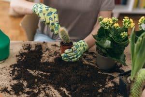 Cactus Compost