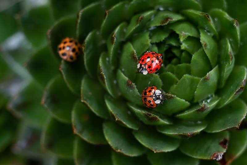 Do Succulents Attract Bugs