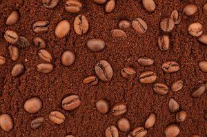 Do Succulents Like Coffee Grounds