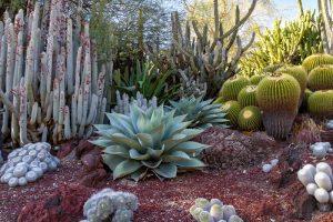 How Big Do Succulents Get