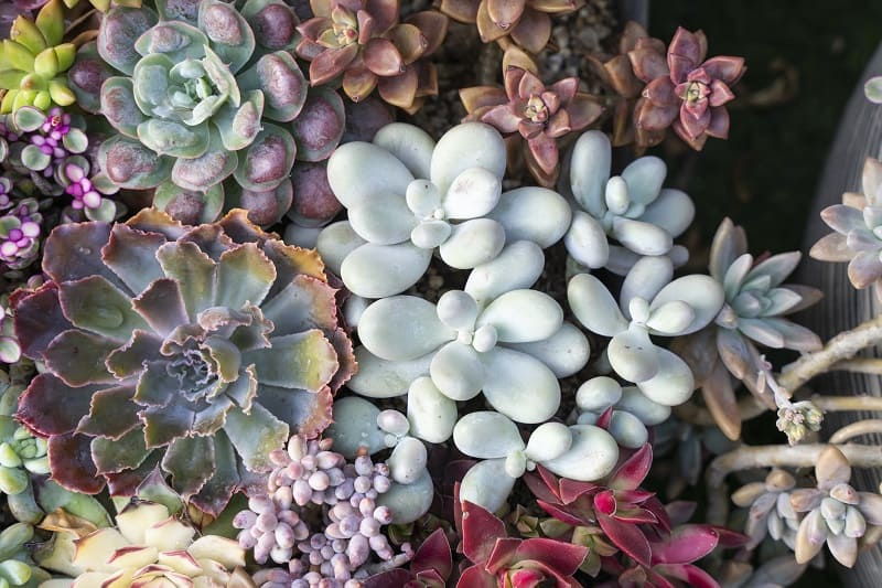 How To Keep Succulents Small