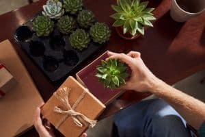 How To Ship Succulents