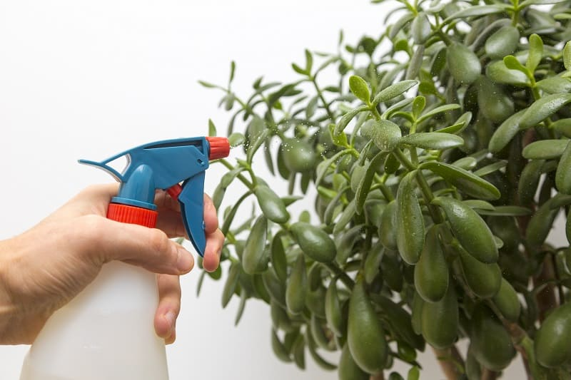Insecticide for Succulents