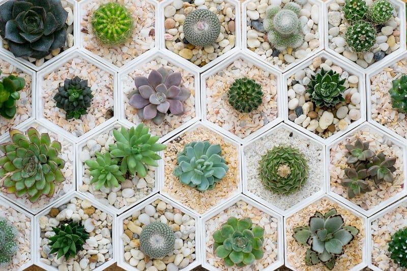 Potting Pebbles for Succulents