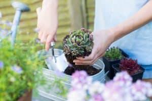 Succulent Compost
