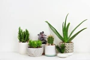 9 Benefits of Succulents
