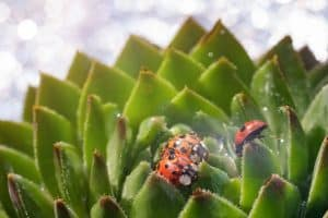 Bugs On Succulents
