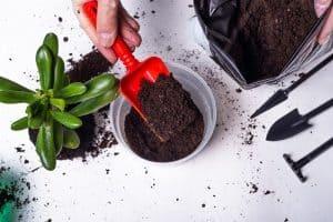 Can I Use Regular Potting Soil For Succulents