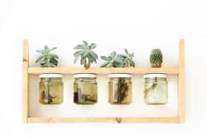 How To Water Propagate Succulents