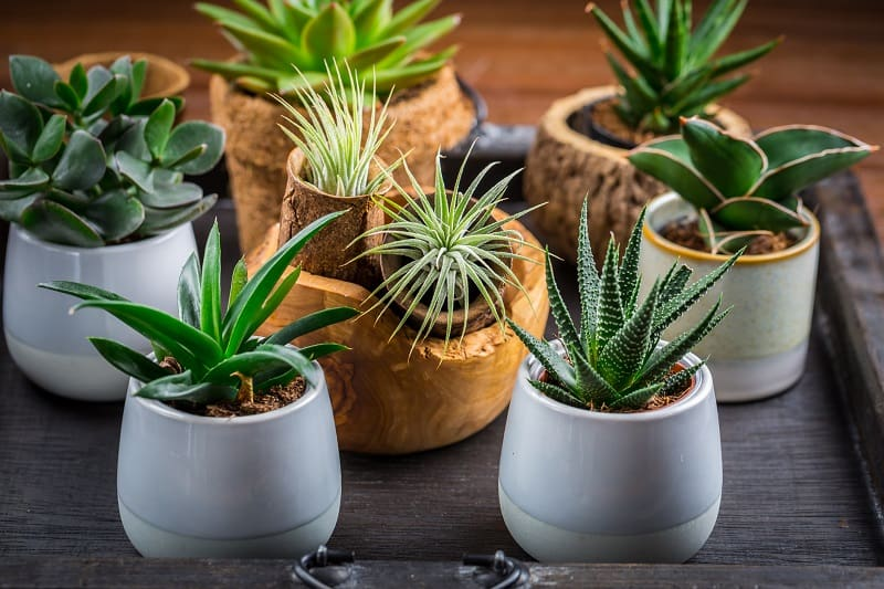Difference Between Air Plants and Succulents