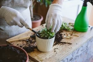 How To Grow Succulents Without Roots