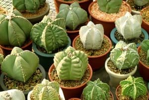 What is The Right Temperature for Succulents