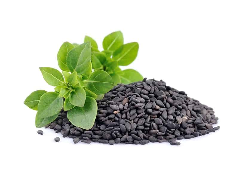 How To Grow Basil From Seed?
