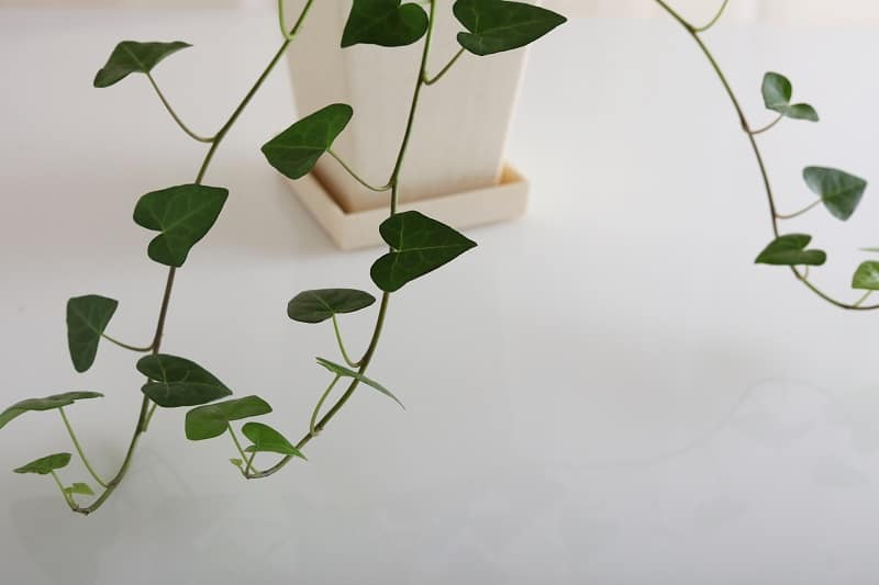 How To Propagate String of Hearts?